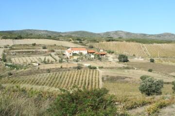 Roussillon, andet end udvandet frikadellevin