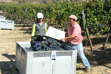 Argentinsk satellitvin er fremtiden – Artikel