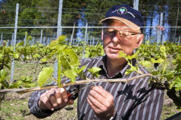 Så godt er dansk vin efter 20 år